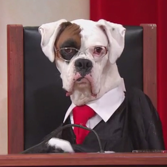 John Oliver's Supreme Court Reenactment Stars a Whole Bunch of Dogs