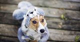 Americans Spend Obscene Sums on Halloween Costumes for Pets