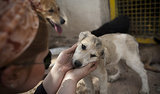 Malaysia Islamic Authorities Probe 'Dog Patting' Event