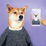 Hey, Gawker: Is Dressing Up a Shiba Inu REALLY Animal Cruelty?