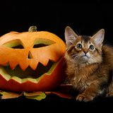 Can You Decide Which Cat Has the Best Halloween Photo?