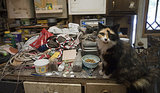 Rescuers Find 150 Cats at New York Home