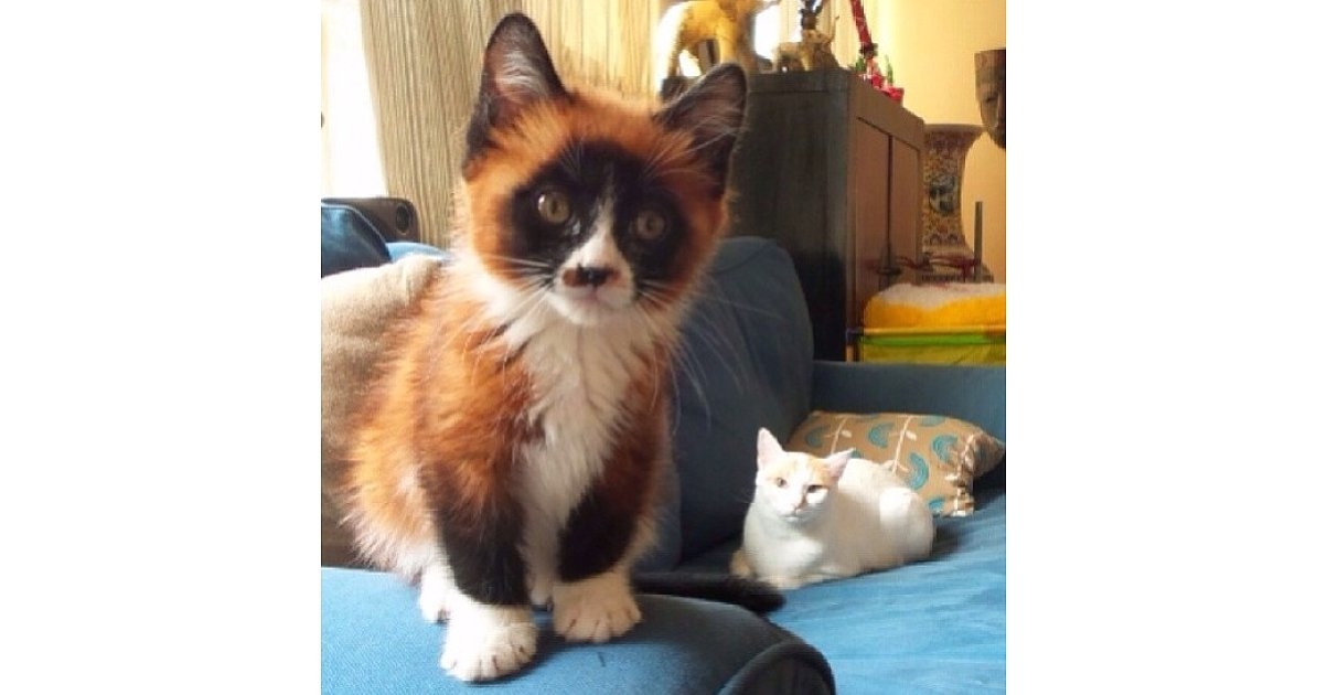 This CatFoxPanda Hybrid 25 Glorious Cats That Make The