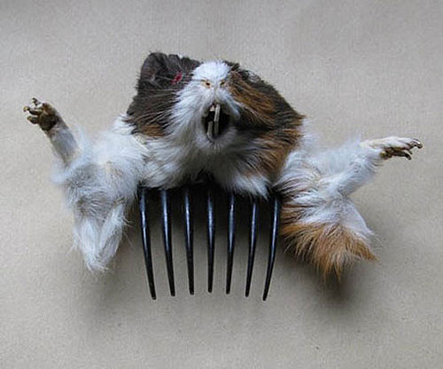 Taxidermied Hair Accessories