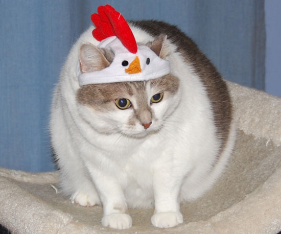 Chicken Hat, Chicken Cat