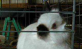 Rabbits Pose Differently Based on Breed: In the LINK of an Eye!