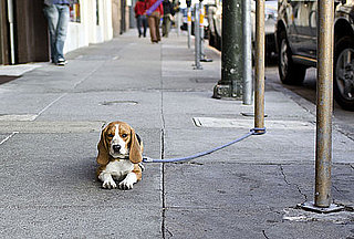 Do Tell: Do You Greet Pets on the Street?
