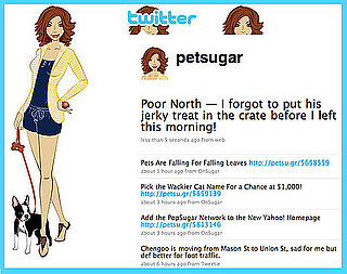 Follow PetSugar on Twitter!