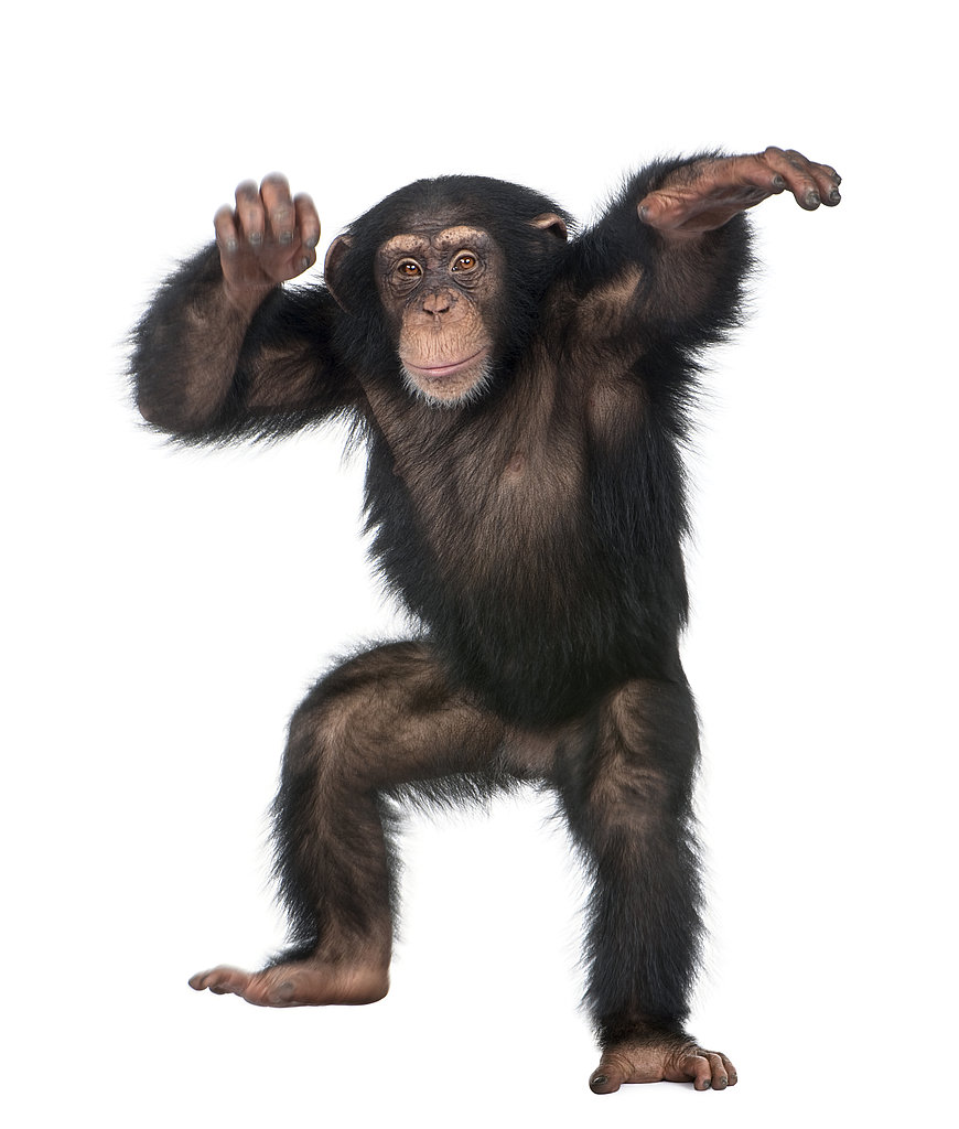 Chimp Dance