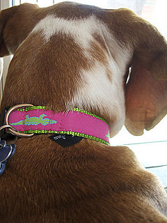 PetSugar's Street Team: Moochie & Co. Mud Puppies Collar