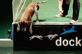 Sport Two: Diving Dogs