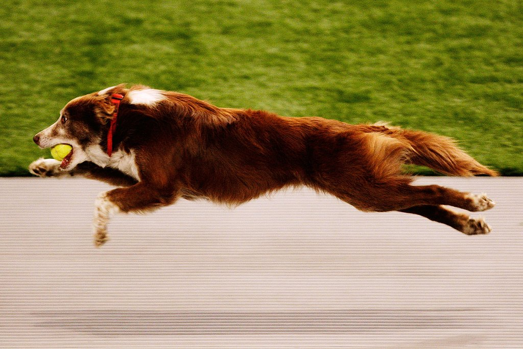 Sport Three: Flyball