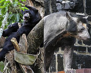 The Scoop: Dolores Is the Beary Hairless Bear