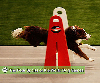 Fur-vival of the Fittest: Behind-the-Scenes at the World Dog Games