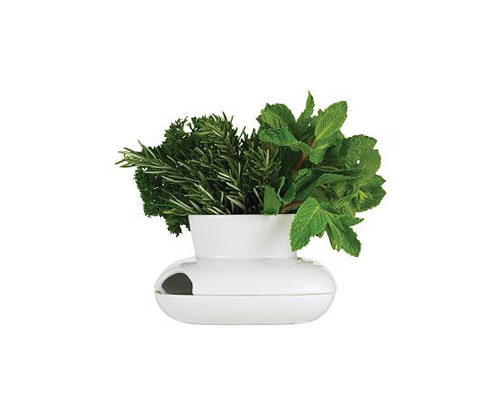 Herb Pot