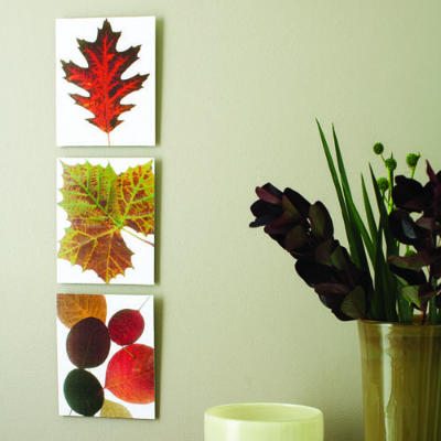 Sunset helps you make Fall leaves last with this printing project.