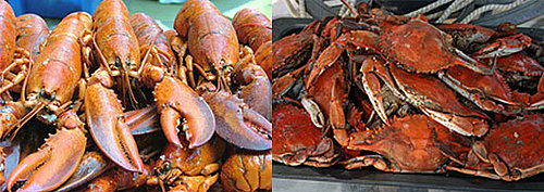 Would You Rather Eat Lobster or Crab?