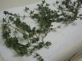 Homemade Thyme Cracker Recipe 2009-12-15 13:59:27