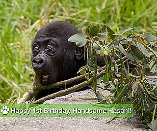Happy First Birthday, Handsome Hasani!