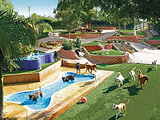 Canyon View Ranch Is Doggy Paradise: In the LINK of an Eye!