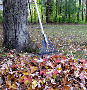 Tips For Cleaning the Yard Without Breaking Your Back