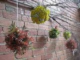 Forgo a traditional wreath altogether, and hang pomanders from a branch instead. Source