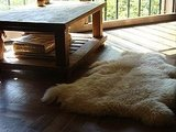 Keep you toes warm with this Sheepskin Rug ($65).