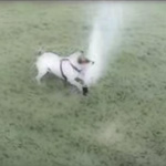 Do Tell: Dog's View of Sprinklers — Time to Attack or Jump Back?