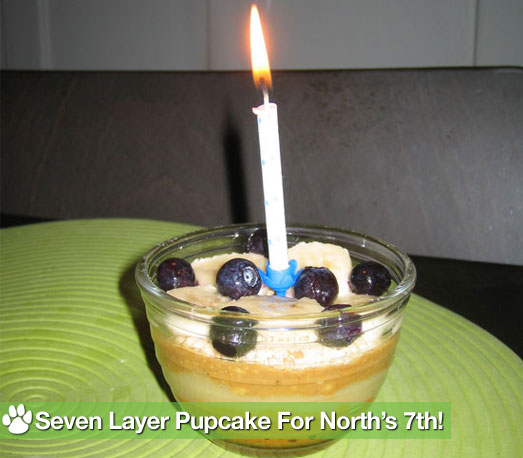 Make a No-Bake Pupcake For a Special Birthday Treat!