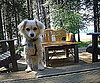 Pet Pic of the Day: Sitting on the Dock . . . 