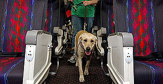 Pay As You Go: Check Out My Handy Chart of Airlines' Pet Fees
