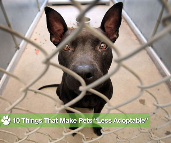 10 Reasons Why Some Animals Aren&#039;t Adopted for Adopt a Less Adoptable Pet Day, list