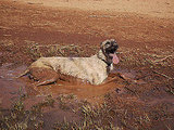 New Meaning of Mud Bath