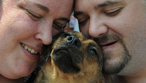 9 Hero Dogs Who Deserve a Bone: In the LINK of an Eye!