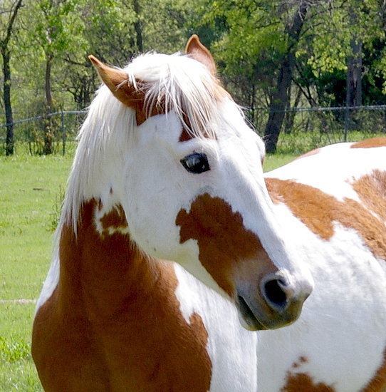 Popular Pet Horse Names