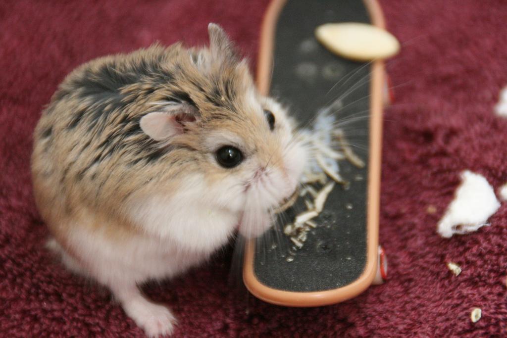 Popular Pet Hamster Names