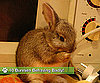 10 Bunnies Behaving Badly!