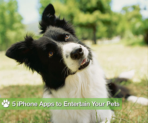 5 iPhone Apps For Pets' Cheap Thrills