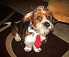 Pet Pic of the Day: Forrest Is One Classy Businessman