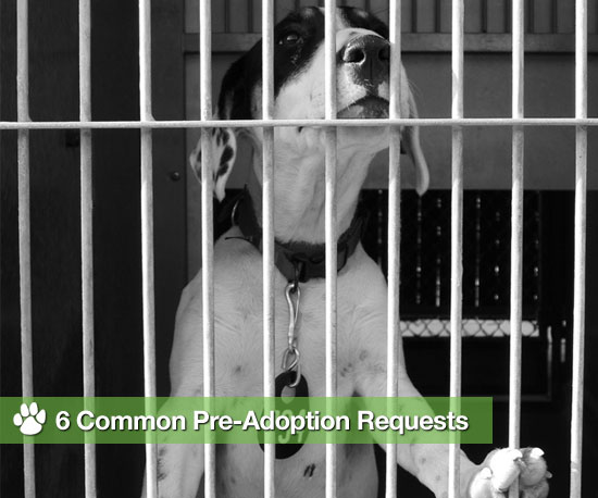 Don't Be Surprised If a Shelter Asks For These 6 Things . . .