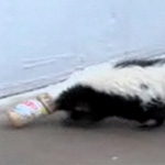 The Scoop: Skunks Love Peanut Butter, Too