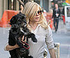 Slide Photo of Sienna Miller Carrying Her Dog in NYC