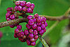 Cool Capture: Beautiful Berries Taken With a Nikon D40