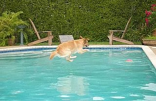 Would You Let a Dog Swim in Your Swimming Pool?