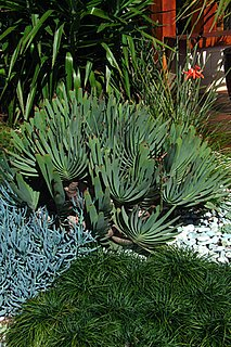 Do You Have Succulents In Your Garden?