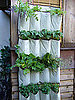 Cool Idea: A Shoe Organizer as a Vertical Garden