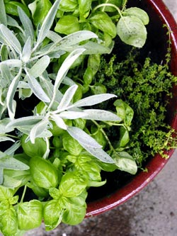 Re-Nest helps you to make a one-pot herb garden that can easily fit into your kitchen window throughout this Fall and Winter.