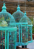 Filled with moss and other plants, and painted in one shade, three birdcages become whimsical outdoor décor. Source: Flickr user melingo wagamama