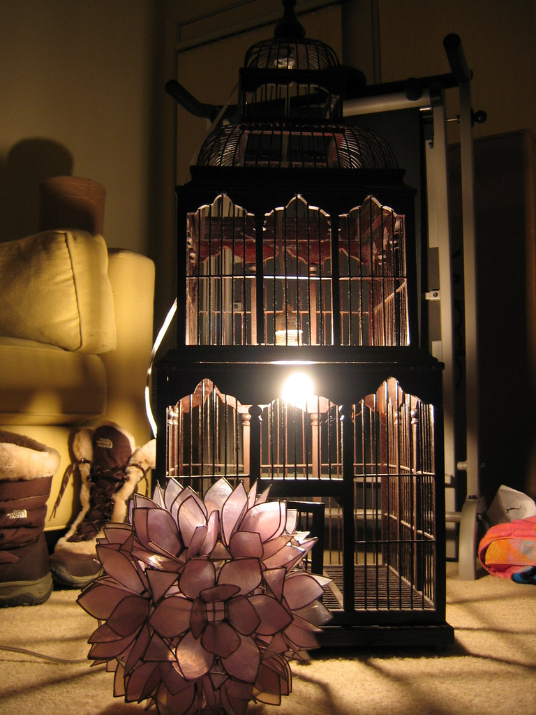 Outfitted with a light bulb, this birdcage becomes a light fixture that casts beautiful shadows around the room. Source: Flickr User goatling