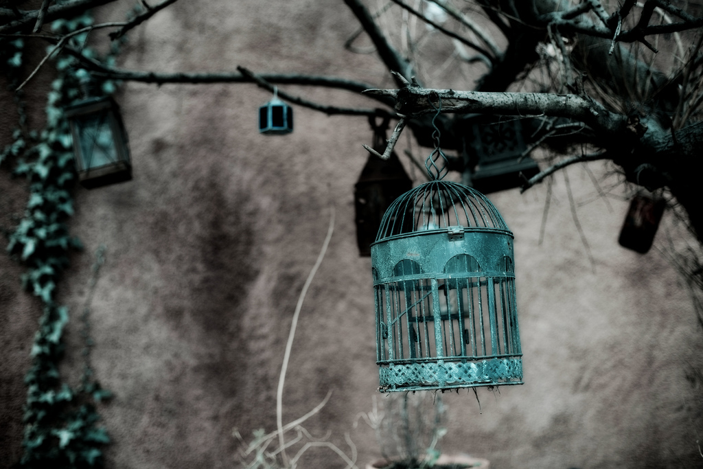 Hung from a tree among lanterns and other trinkets, a birdcage brings flair to an outdoor space. Source: Flickr User Tyla'75